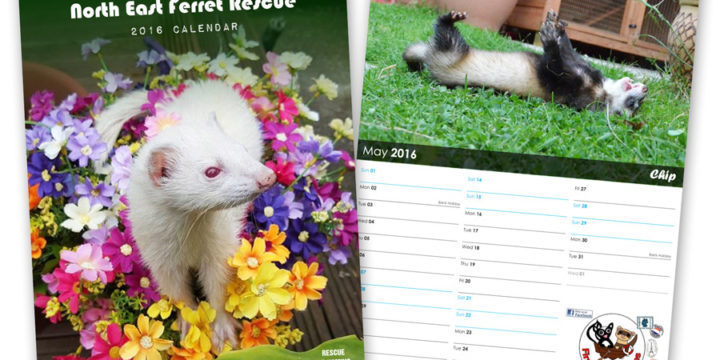 Ferret Rescue Calendar 2016