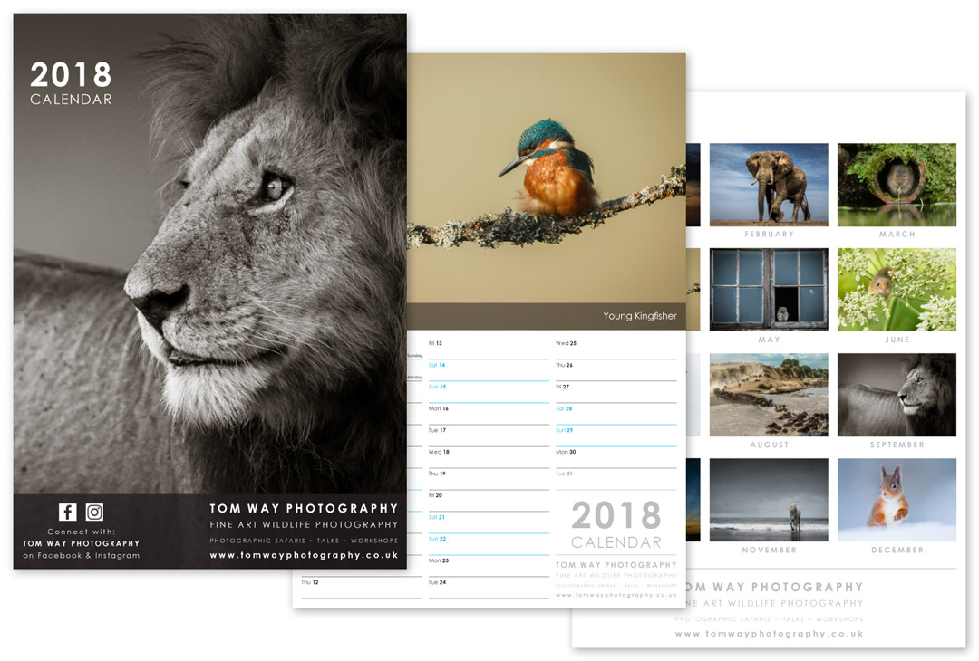 Calendar Design With Pictures : Photography calendar design modred