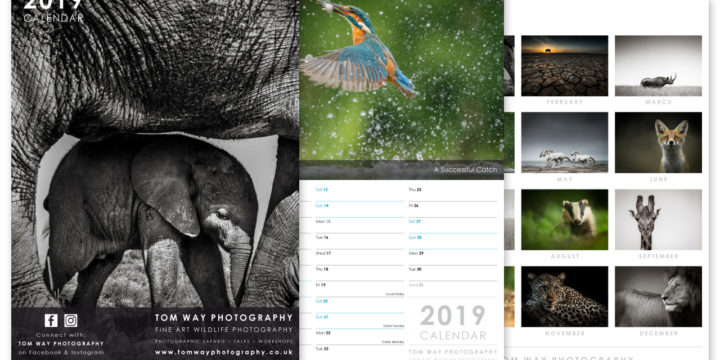 Photography Calendar Design for 2019